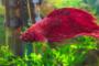 Infecciones fúngicas en peces